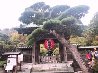 🐱鎌倉🐱★★★