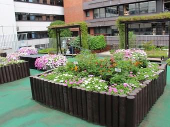 ウワサのお弁当スポット  葛飾区役所「緑と花のいこいガーデン」  に行ってみた!