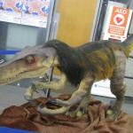 第31回葛飾区産業フェア  怒りんぼの恐竜も来場