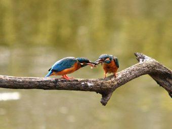鳥さんたちのバレンタイン・デー
